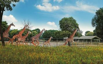 上海野生动物园汽车救援电话