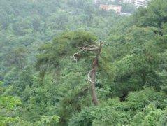 黔灵山汽车救援,黔灵山道路救援,黔灵山拖车救援电话